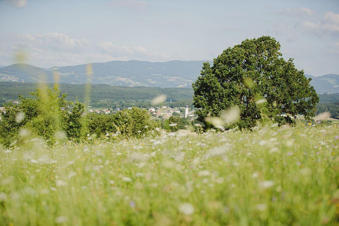 Fotogalerie - Ramsar Schutzgebiet 7